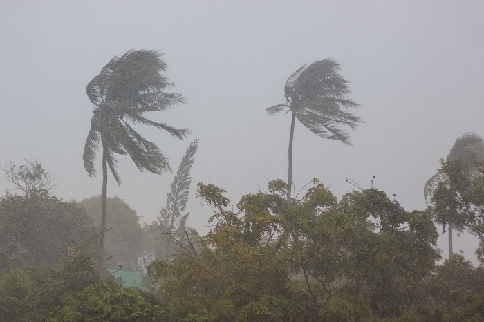 Trees Blowing In Hurricane Winds